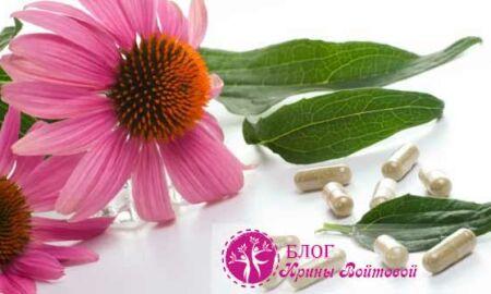 Эхинацея— удивительное растение, повышающее иммунитет